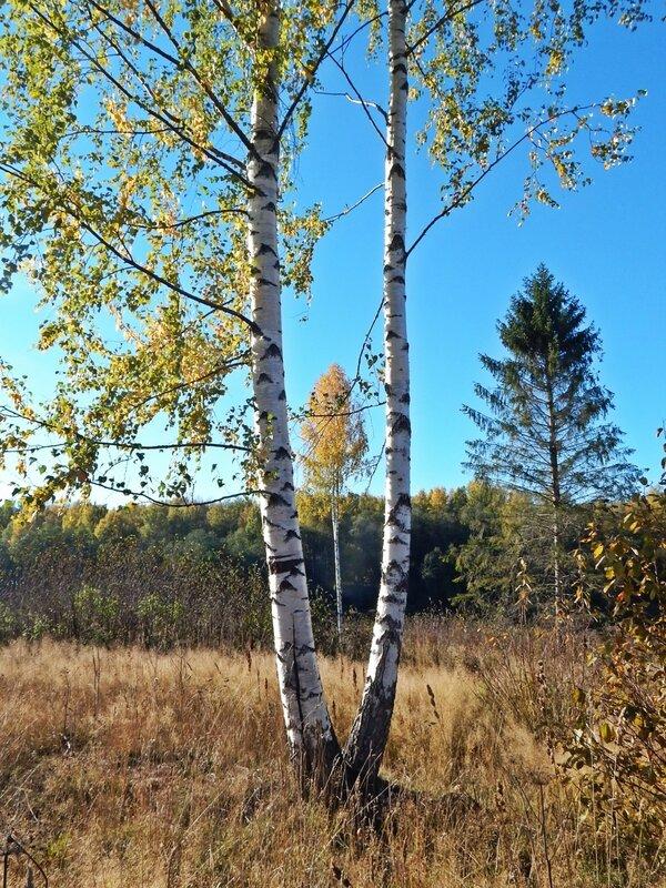 Этюд с осенью