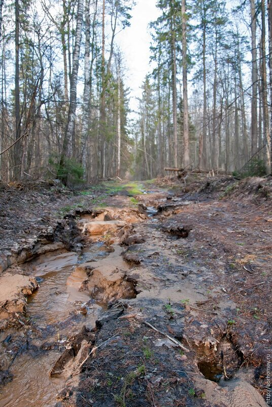 вода в лесу