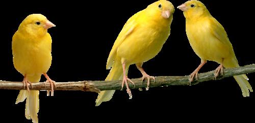 Ptice..... 0_7864f_ee98e296_L