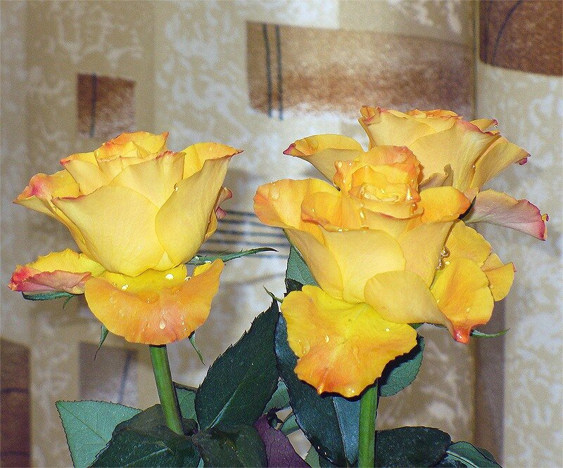 Просто розы, 8 марта 2011