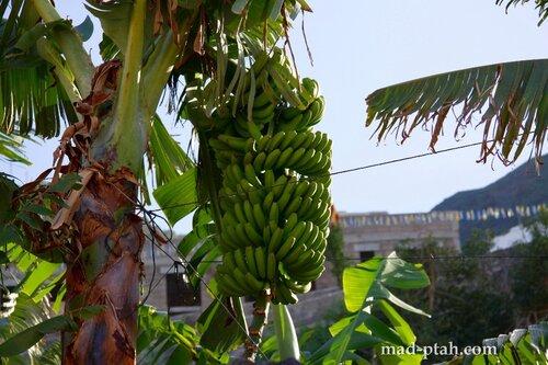 тенерифе, бананы