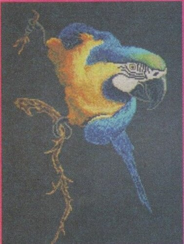 Желто-синий попугай: вышивка