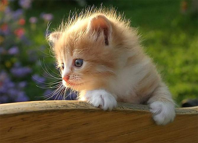 кошки - греется на солнышке