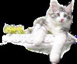 Кошки 5 0_57c48_cbd1e59_S