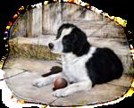 Собаки  0_57c82_45a62354_S