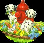 Собаки  0_57c86_83c4df07_S