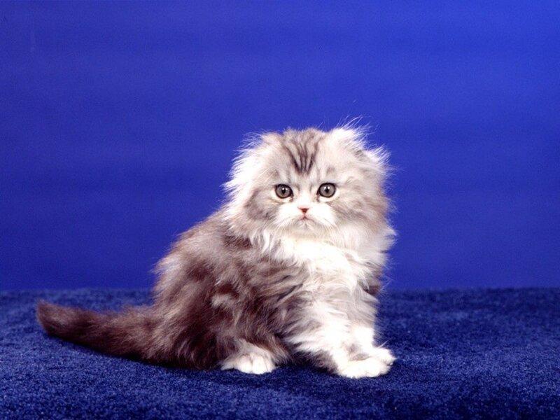 Кошки  0_5294a_6f7e0402_XL
