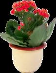 Домашние цветы 55