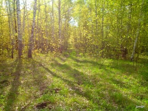 В лесу (увеличенная Насыщенность)