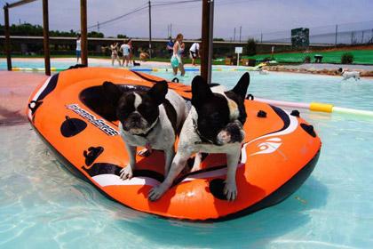 В Испании открыт курорт для собак и их владельцев
