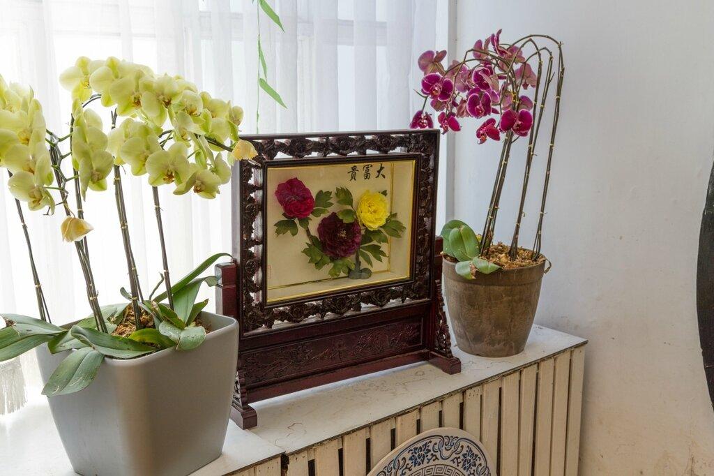 Пионы и орхидеи