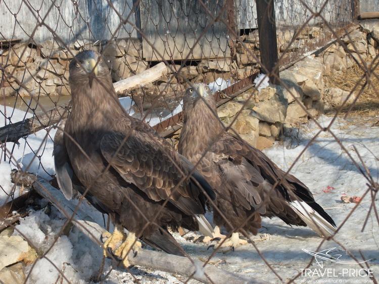 птицы в зоопарке Казани