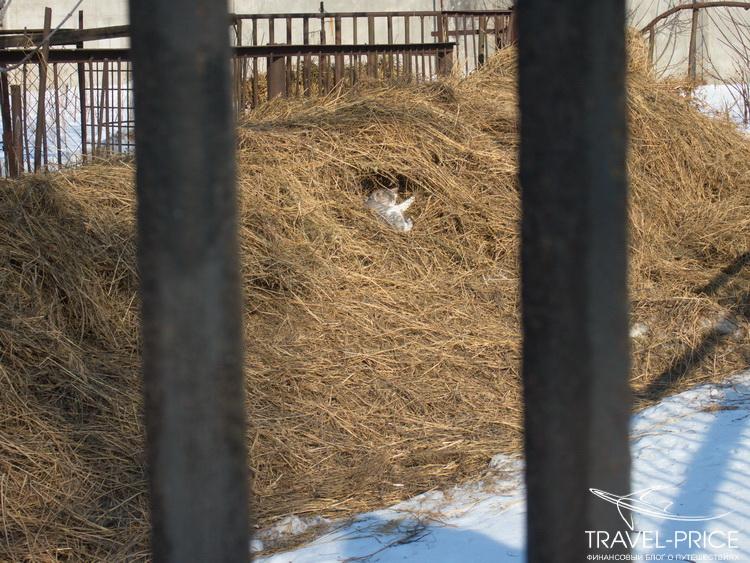 кот в зоопарке