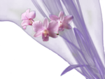 1185 - flower - LB TUBES.png