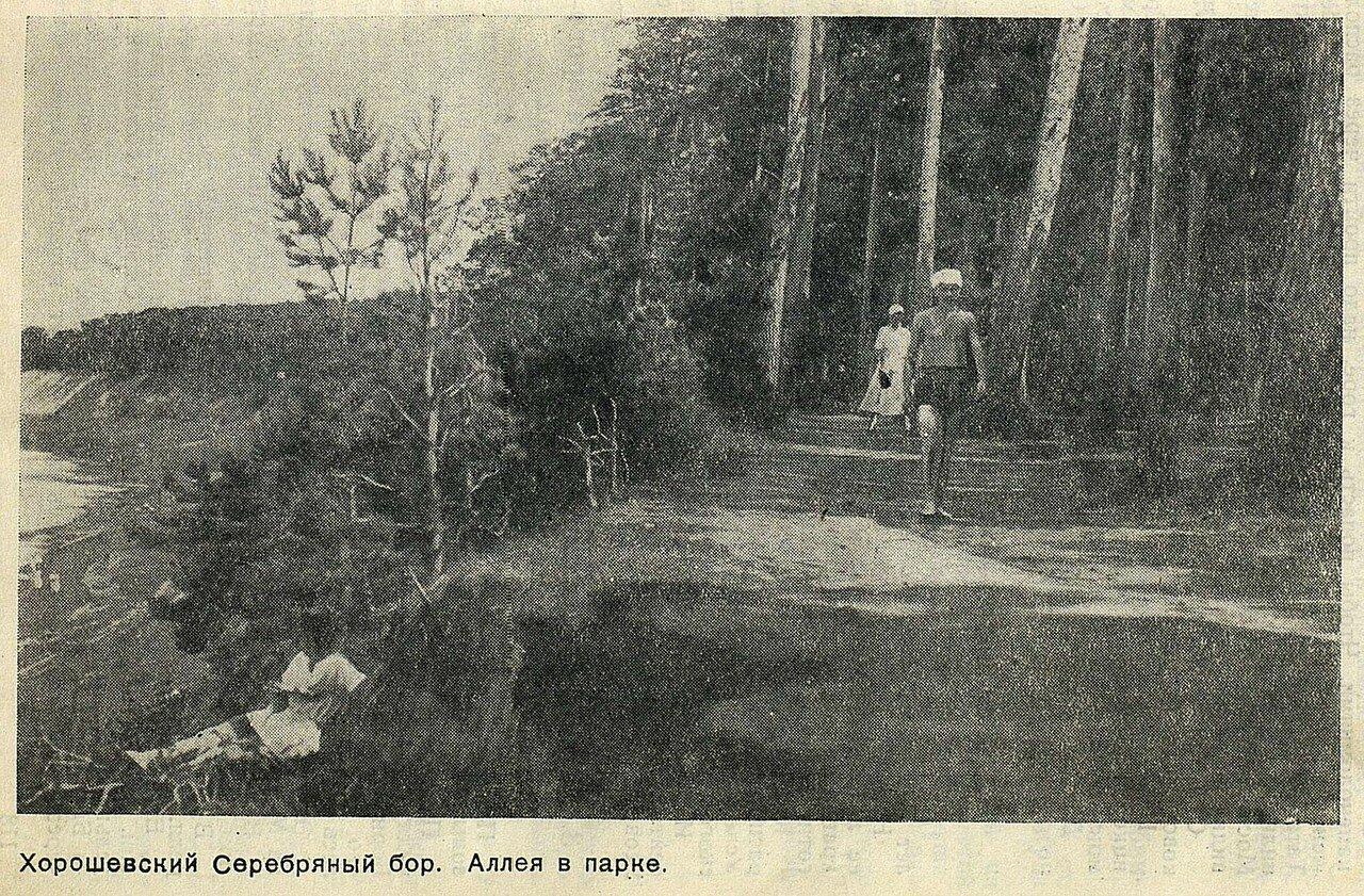 Хорошевский Серебряный бор. Аллея в парке