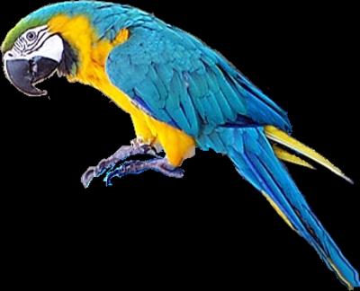 Ptice..... 0_8482f_4b9cad4b_L