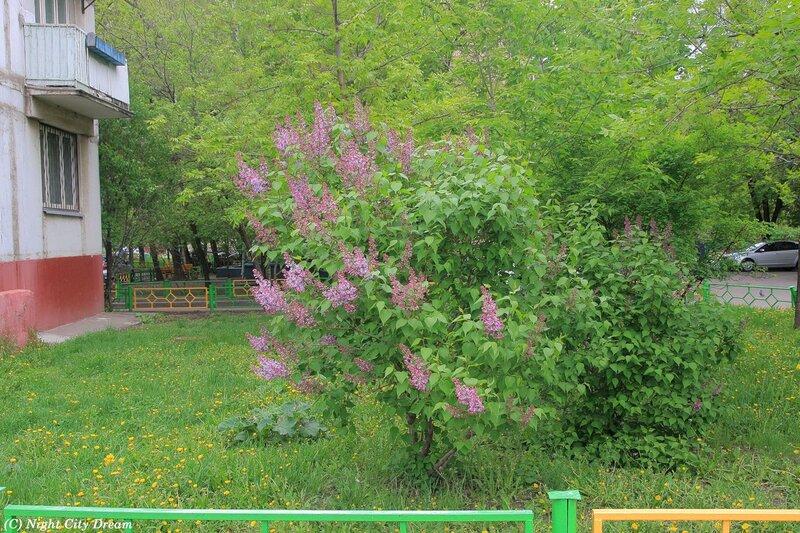 http://img-fotki.yandex.ru/get/4704/night-city-dream.ad/0_5a8bd_de709312_XL.jpg
