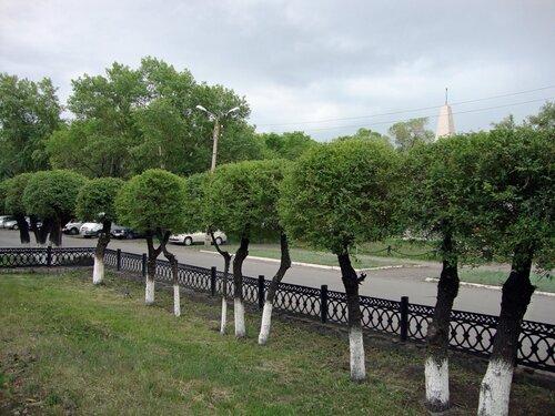 20110606 - Стрижка деревьев06