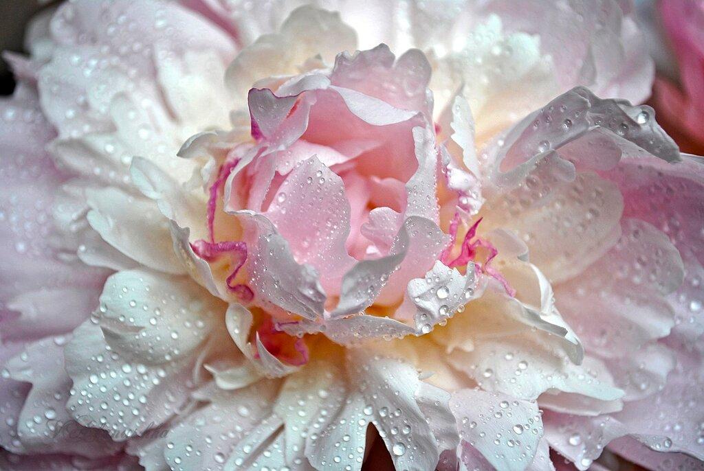 Это не слёзы, а капли росы на цветах