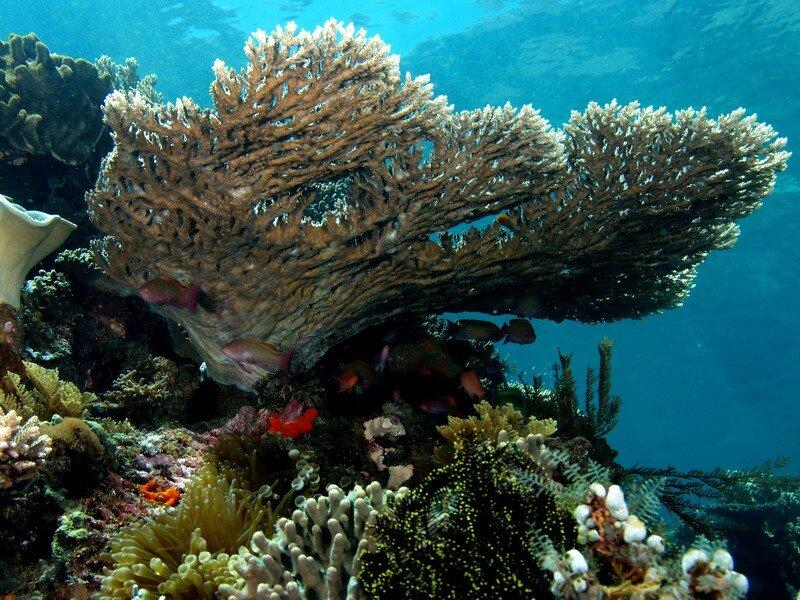 Подводный мир-Kораллы 46966