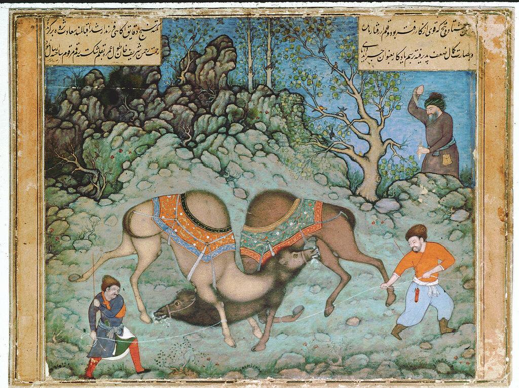 1280px-Abd_al_Samad__Two_Fighting_Camels_ca__1590__Private_Collection.jpg