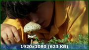 http//img-fotki.yandex.ru/get/47043/170664692.41/0_1263_ae6ca4_orig.png