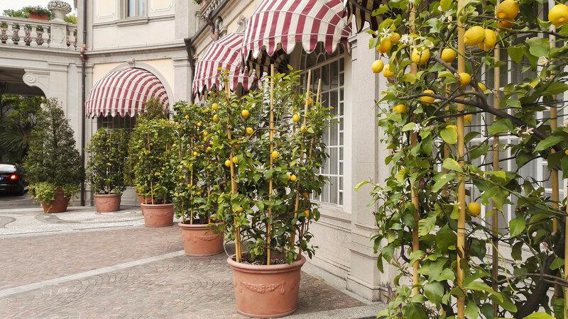 Кадки с лимонами у входа в отель