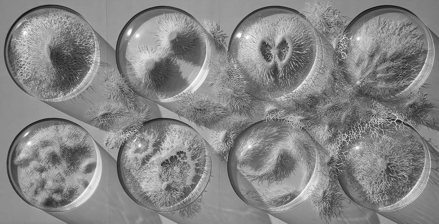 Замысловатые скульптуры различных организмов из бумаги Рогана Брауна