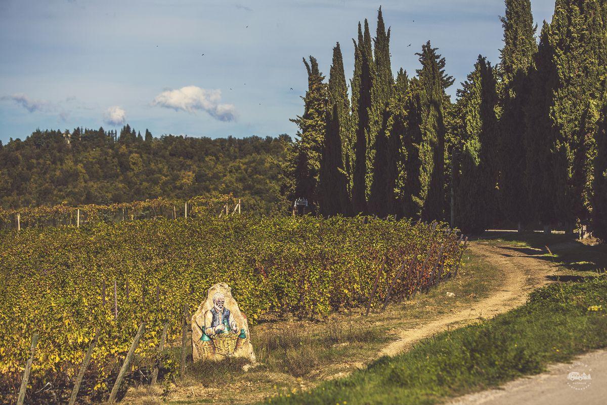 Виноградники San Felice.