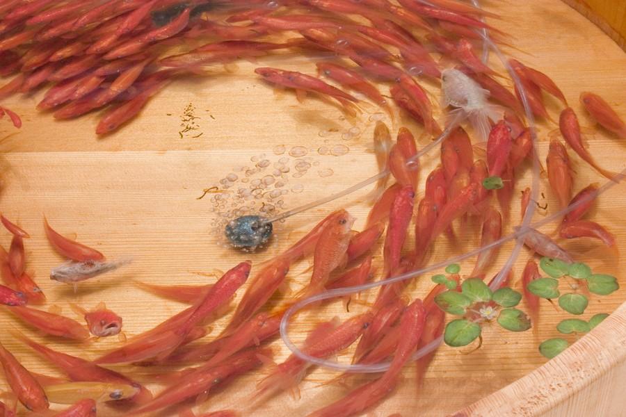 Потрясающие трёхмерные рисунки японского художника Рюсуке Фукахори (11 фото)