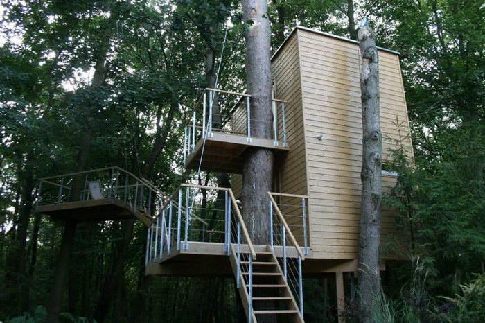 11. Апартаменты с деревом