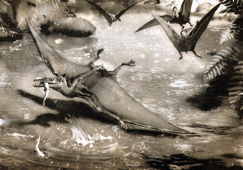 Рептилии всостоянии видеть сны— Биологи