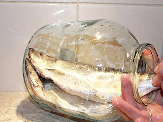ribalovka kdjd.jpg