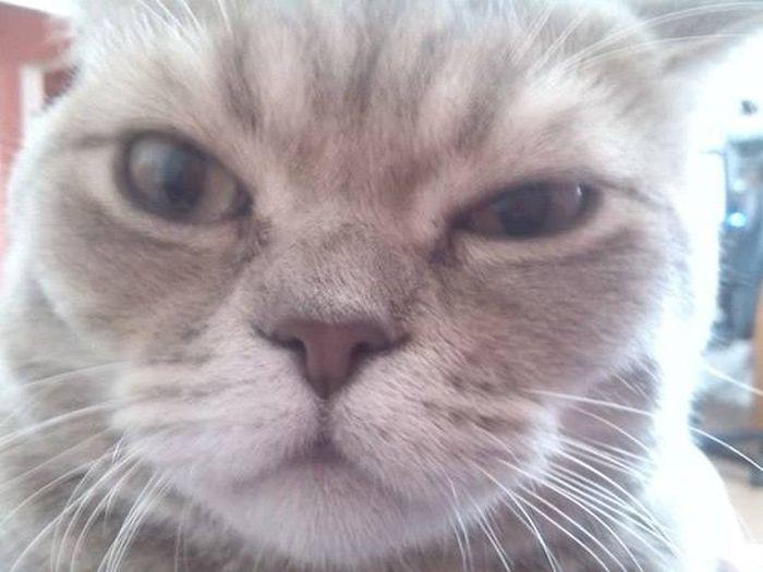 Запуганные котом соседи вызвали ОМОН