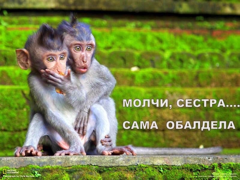 young-macaques-look-surprised-mortified-sacred-monkey-sanctuary-ubud-bali-indonesia-chris-norfolk.jpg
