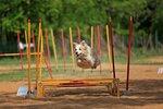 Спорт по собачьи