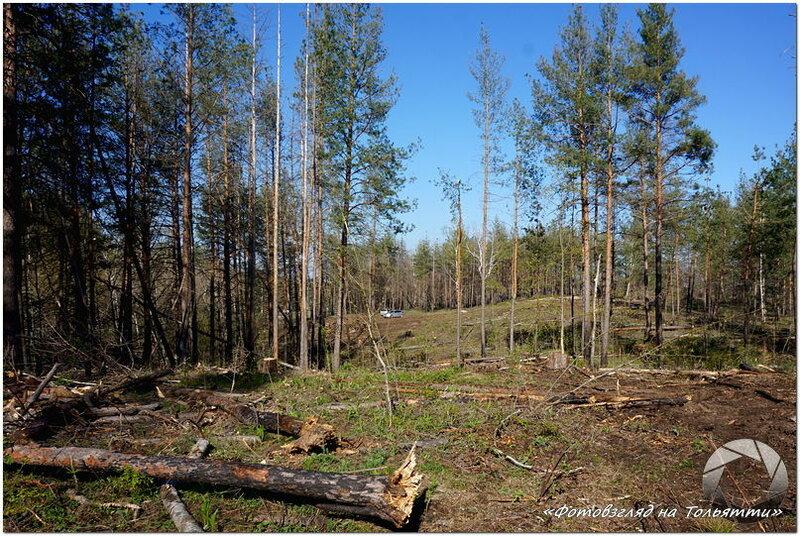 В Тольятти рубят лес
