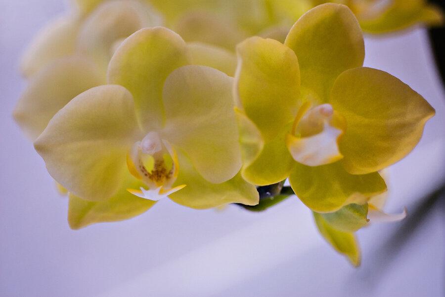 365/176 - орхидея