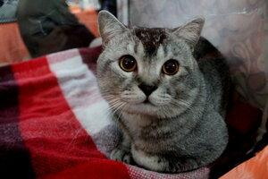 Удивленный котик.
