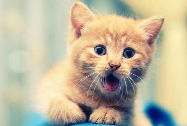 Сколько лет вашей кошке? 0 12e671 fbf624a5 orig