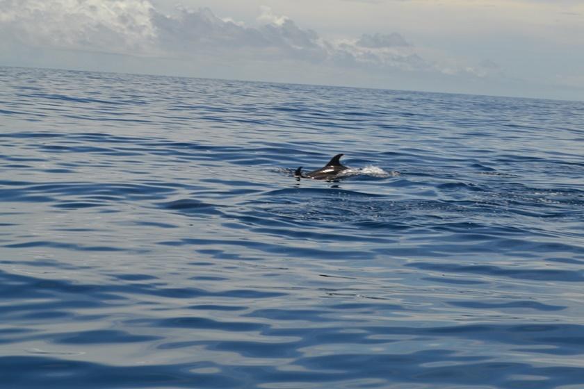 Дельфины у побережья Венесуэлы. Красивые фотографии 0 141a4f e0bad3a0 orig