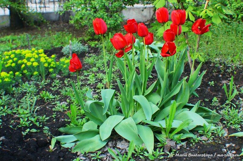 Цветы в скверике музея К.А.Федина, Саратов, 06 мая 2014 года