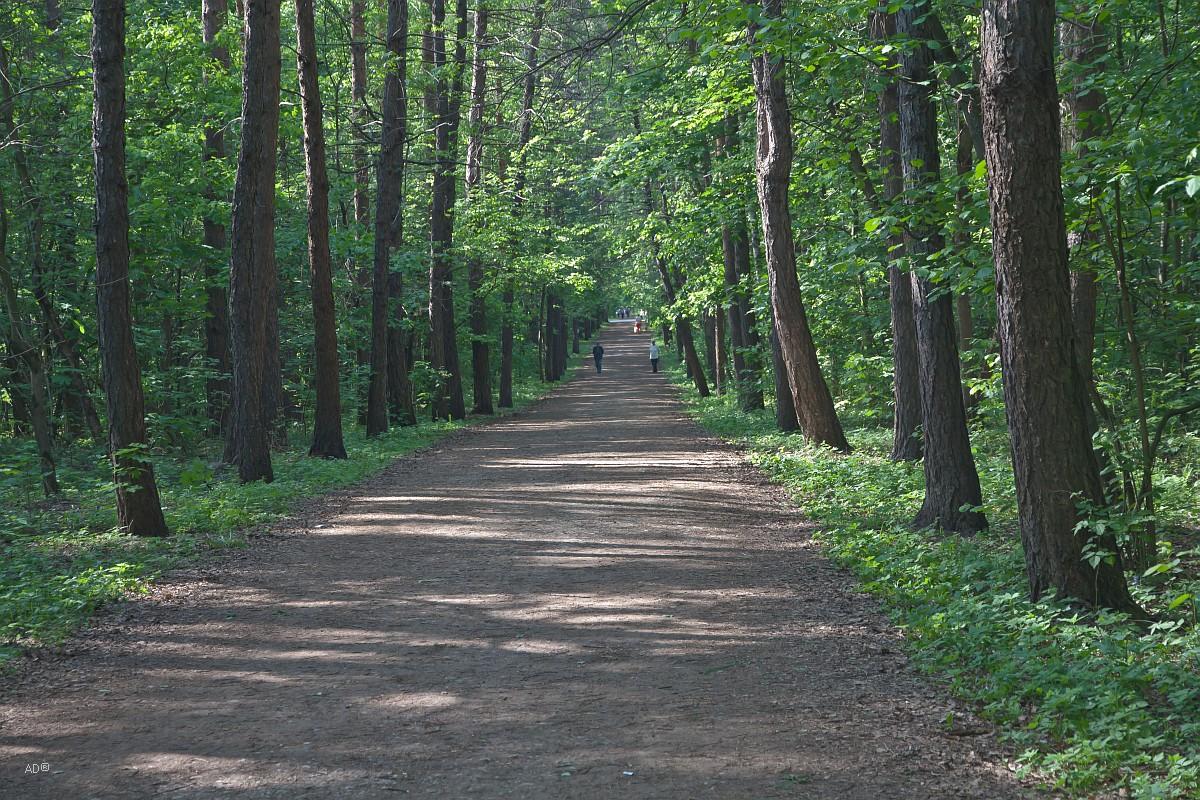 Лосиноостровский парк