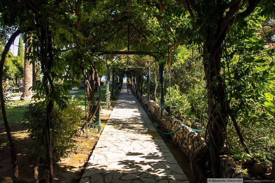 Зелёный коридор в саду дворца Ахиллеон