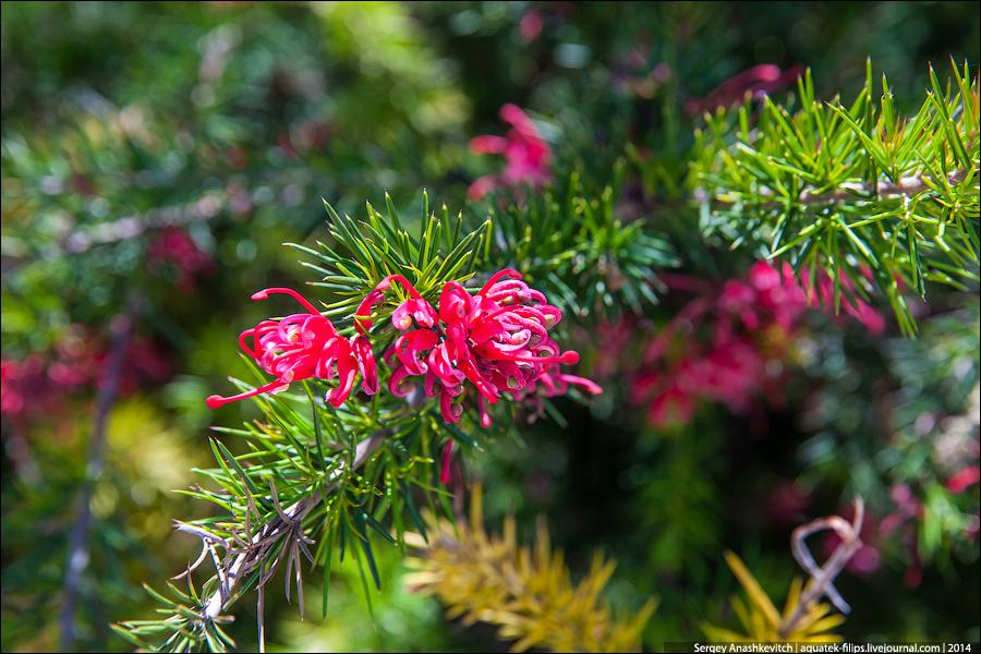 хвойные цветущие растения фото с названиями
