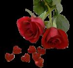 585 - rose - LB TUBES.png