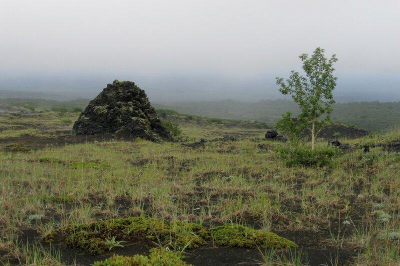 Березка и вулканическая бомба, Толбачик, Камчатка