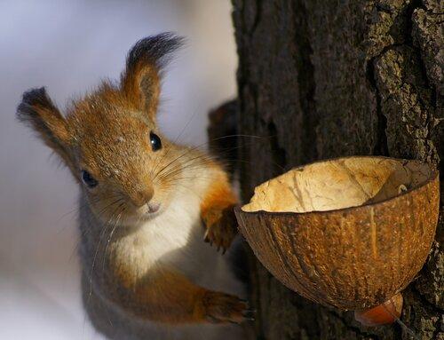 У какой орех !!!