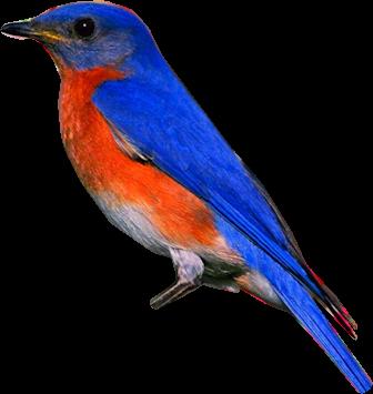 Ptice..... 0_84841_54175760_L