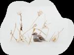 Yoka-Misted-Birds220309.png